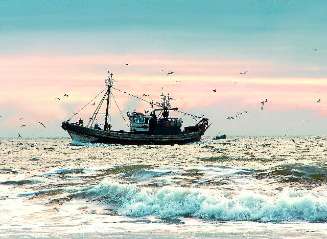 Garciden - Pescado y Marisco - Logística - Garciden - Atún - Negocio - Pescado y Marisco