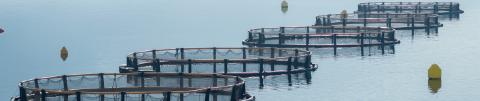 Garciden - Pescado y Marisco - Logística - Garciden Acuicultura - Atún